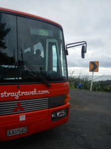 Stray Travel Bus