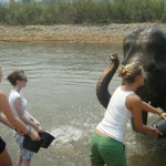 An Elephant can forgive, but it will never forget