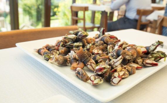 Galician barnacles at Leira Antiga
